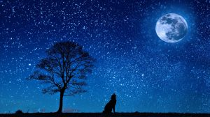 Starry sky - wolf howling at the moon